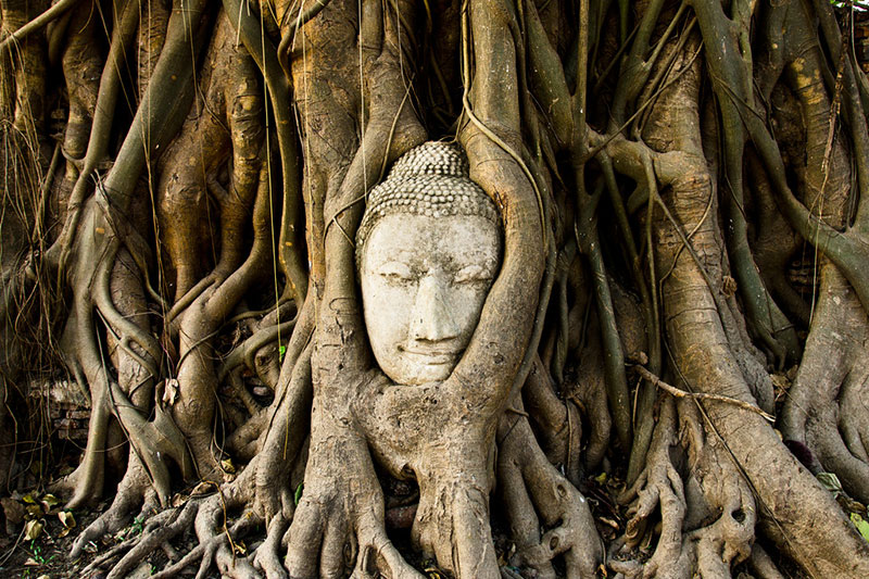 Голова Будды в Паттайе